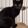 黒猫のクロエちゃん美人さんです❣️ サムネイル2