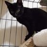 黒猫のクロエちゃん美人さんです❣️ サムネイル3