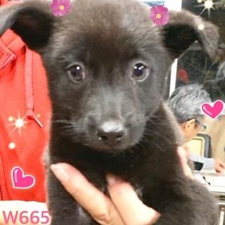 個体識別番号:W665 おとなしい子犬