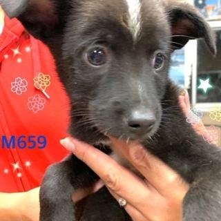 個体識別番号:M659 シャイな小犬です。