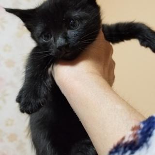 黒猫ちゃん、男の子と女の子