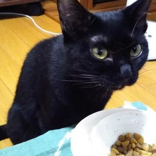 マイペースゴロニャン黒猫ひじき!