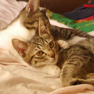 キジ子猫 とても明るい性格