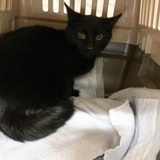 1週間後外へリリースの黒猫ちゃん