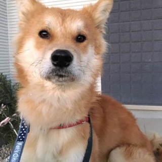 素直で穏やか、甘えん坊のMIX犬ハリオ