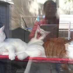魔物を一飲みしちゃう猫剣士みーちゃん