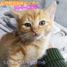 可愛い茶トラ子猫 ファミリーで収容(TT)116