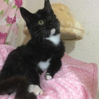 カラスに片目を奪われた子猫です!