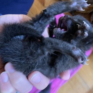 生まれてすぐの猫です