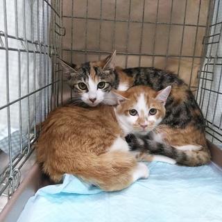 まだまだ慣れ途上の美猫兄妹、ミケ