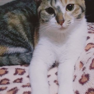 丸顔の美猫ちゃん、みょうが