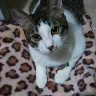 優しくてオトボケ猫、なす