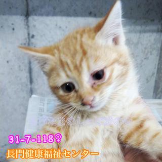 可愛い茶トラ子猫ちゃん ファミリーで収容 118