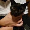 黒猫のエディ