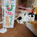 奄美の猫を救いたい〜No.88ホノホシくん