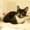 調布市から☆個性的な柄の白黒男子☆子猫です!