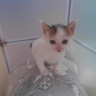 生後1ヶ月半 可愛い子猫2匹います。
