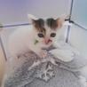 生後1ヶ月半 可愛い子猫2匹います。 サムネイル2