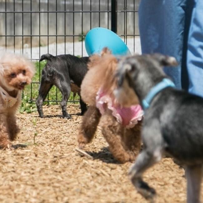 ハッピー犬屋敷のカバー写真