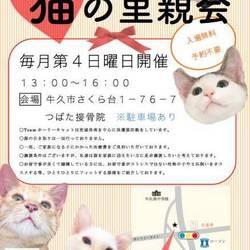 3/22の里親会は中止となりましたm(_ _)m 猫の里親会 in 牛久  茨城県