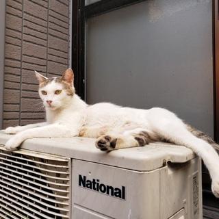 人が大好き★賢い美人猫ヨーコ避妊済み