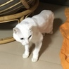 真っ白シニア猫「くるちゃん」決まりました! サムネイル4