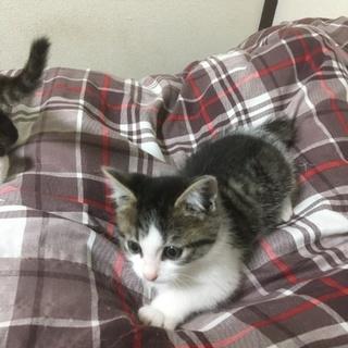 仔猫2匹 同じ親からのお姉ちゃん2匹です。