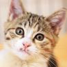 抱っこでゴロゴロが止まらない♡美形の三毛猫ピリカ サムネイル3