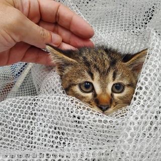 急募!丸いお顔の小さな子猫