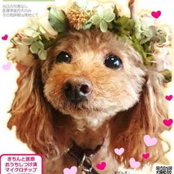GO!保護犬の会in平塚【GO!保護犬GO】