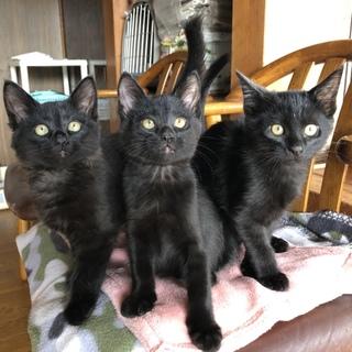 超甘えん坊、黒猫3兄弟。