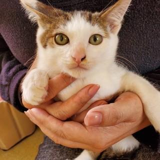 キジ白&黒白の可愛い元気な子猫兄妹です!