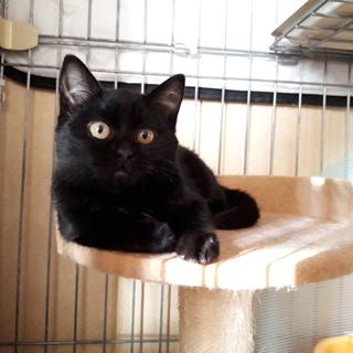 可愛い声の黒子猫♀☆まいちゃん