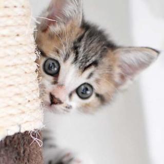 ヒトもネコも大好き★リリちゃん