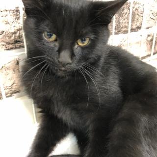 黒猫パワーで家計を黒字にするかもミルクちゃん