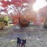 ぽんず嬢と秋の風景