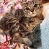 ちび猫 ランタン