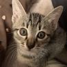 子猫たちの里親募集中 サムネイル3