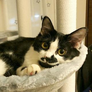 調布市から☆個性的な柄の白黒女子☆子猫です!