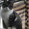 人馴れしてる子猫 サムネイル3