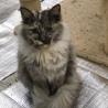 人馴れしてる子猫 サムネイル2