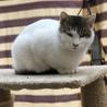 大人しい親猫 サムネイル2