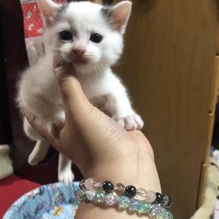 野良が産んだ子猫です。