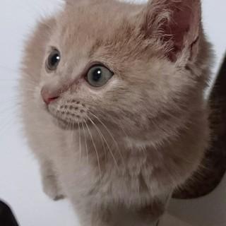 ちんまり子猫のプリアンちゃん