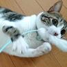 大好きな猫じゃらし!2~3日で分解してしまうけど…。