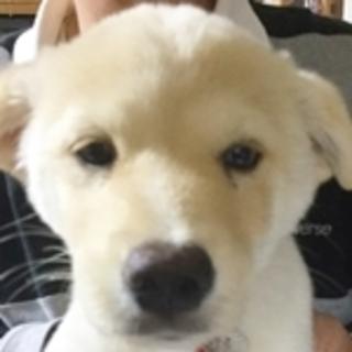 保護犬ナンバーD1366 ミックス子犬