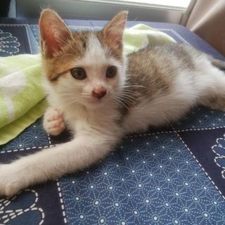 迷子のカワイイ子猫です、どなたか助けて下さい。