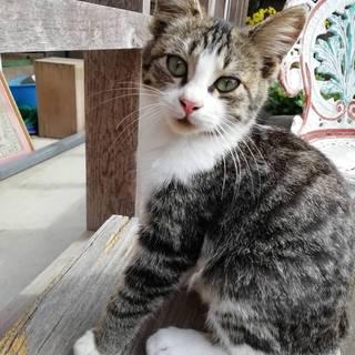 アニメにでてきそうな子猫です。