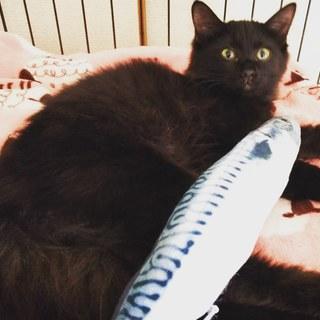黒猫長毛の綺麗な女の子