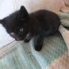 黒猫※生後3ヶ月程度の里親募集!
